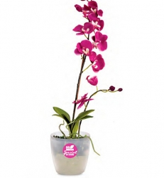 Roto-for-orchids